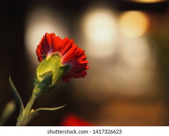 Beautiful red flower for background.