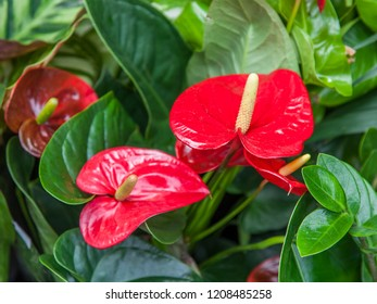 Beautiful red flower in a garden
