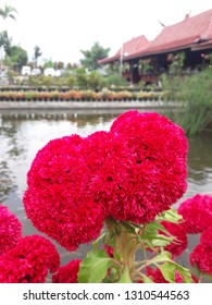 beautiful red flower near lake at warung wareg, batu malang Indonesia