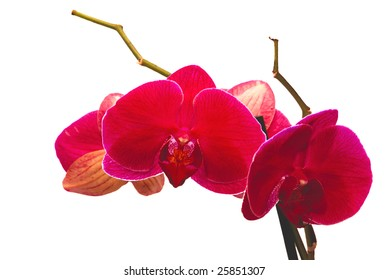 beautiful red flower to orchids