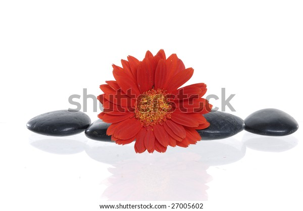 beautiful red flower and spa stones on isolated