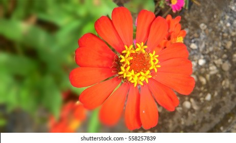 Most Beautiful Flowers World Hd Stock Images Shutterstock