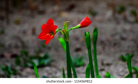 Beautiful red flowers of the green plants isolated unique photo