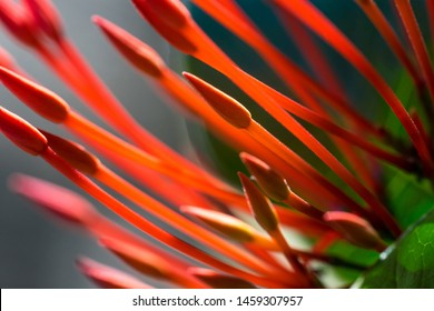 Beautiful red flowers in natural sunlight on a green background. Macro shooting