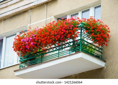 Beautiful red flowers on balcony apartament. Home or flat floral composition decoration.