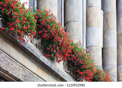 beautiful red flowers on an old building