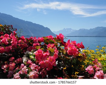 Beautiful red flowers at promenade in european Montreux city at Lake Geneva in canton Vaud in Switzerland, clear blue sky in 2017 warm sunny summer day on July.