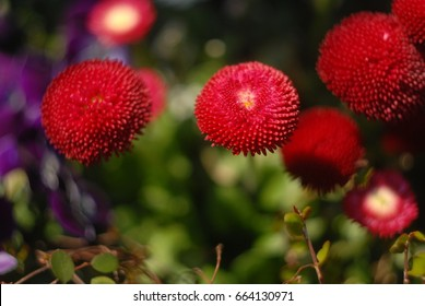 beautiful red flowers.closeup. background