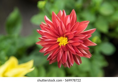 Beautiful red flower,The name of the flower is love at first sight, The empty text