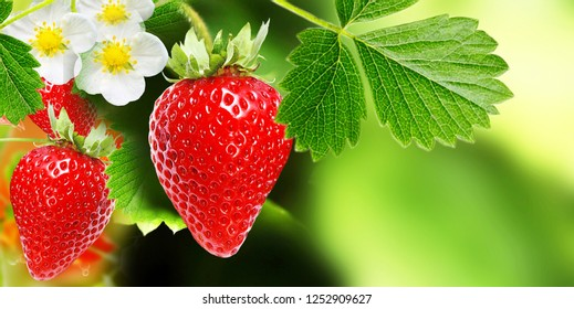 Beautiful red fresh strawberry summer