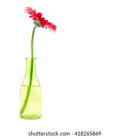Beautiful red gerbera flower in glass bottle vase isolated on white background / summer decor / love valentine day gift or postcard studio object / water