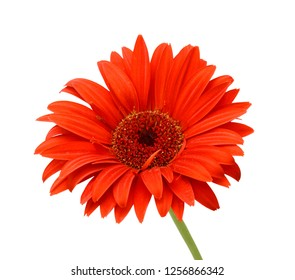 Royalty Free Red Flower White Background Images Stock Photos