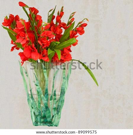 Beautiful Red Gladiolus Flower Vase Against Stock Photo Edit Now