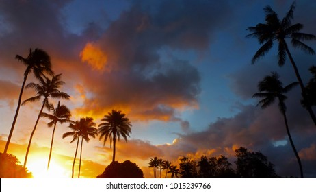 Beautiful red and gold sunset with palm trees silhouettes in Oahu, Hawaii