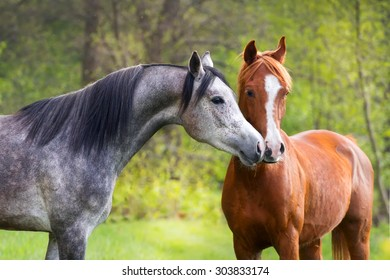 Beautiful red and grey color arabian horse couple in love