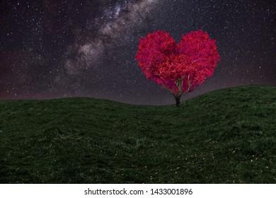 beautiful red heart shaped tree at night