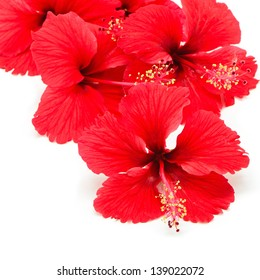 Beautiful red Hibiscus flower isolated on a white background
