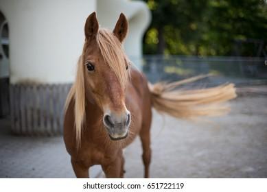 Beautiful red horse portrait