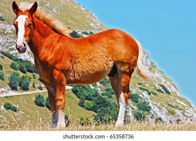 Beautiful red horses taken in Italian mountains - the Apennines