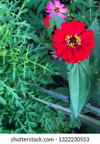 Beautiful red isolated flower close up view