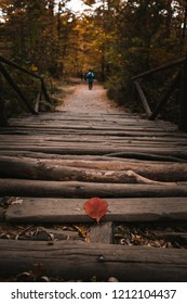 Beautiful red leaf burned from the autumn weather fallen on a bridge in Vitosha mountain park in Sofia, Bulgaria with stunning symmetry and woman in a blue sweater in the distance walking away sadly