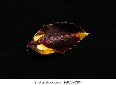 Beautiful red leaf on a macro on a black background