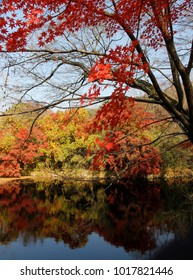 Beautiful red maples blazes brightly and colourful reflection in sunny day, Bulguksa, South Korea