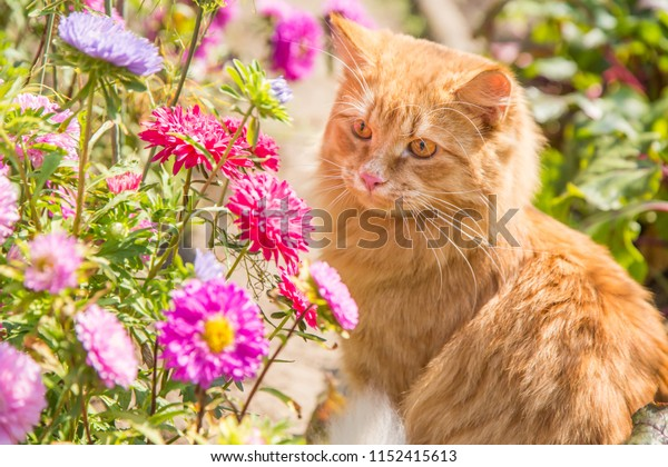 Beautiful red orange cat portrait in flowers, garden in nature
