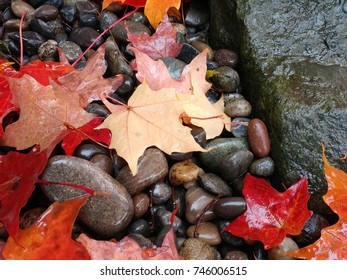 Beautiful Red And Orange Maple Leaves On Round Stones Next To A Rock In  October,