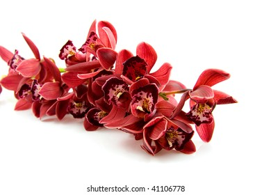 beautiful red orchid in closeup over white background