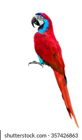 Beautiful red parrot or red parakeet isolated on white background