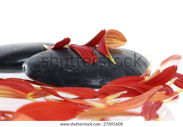 Beautiful red petals with black volcanic rock