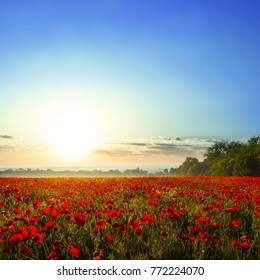 beautiful red poppy field at the early morning