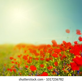 beautiful red poppy flowers background at the hot summer day