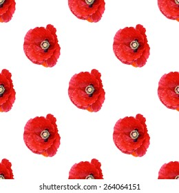 Beautiful red poppy Papaver rhoeas spring flowers seamless pattern on white background. Digital Illustration from macro close up photograph. Wildflowers aka corn poppy, Flanders poppy, Shirley poppy.
