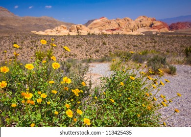 Beautiful Red Rock Canyon desert landscape with wildflowers