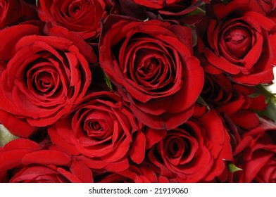 Beautiful red rose background