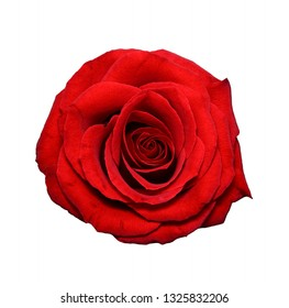 Beautiful red rose close up. Tender rose head isolated. Garden flowers. Deep focus. Top view.