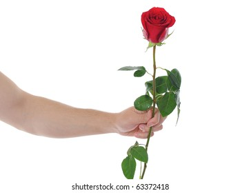 beautiful red rose with dew drops in the hand of man.  isolated on white background