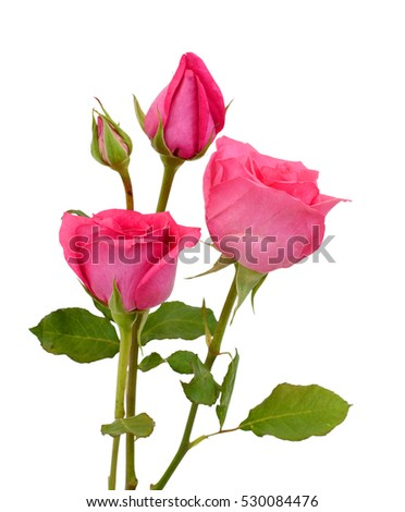 Beautiful Red Rose Flowers Isolated On Stock Photo Edit Now