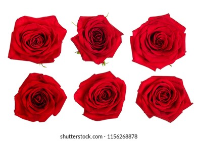 beautiful red rose isolated on white background. Set or collection