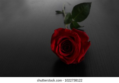 A beautiful red rose laying on table.