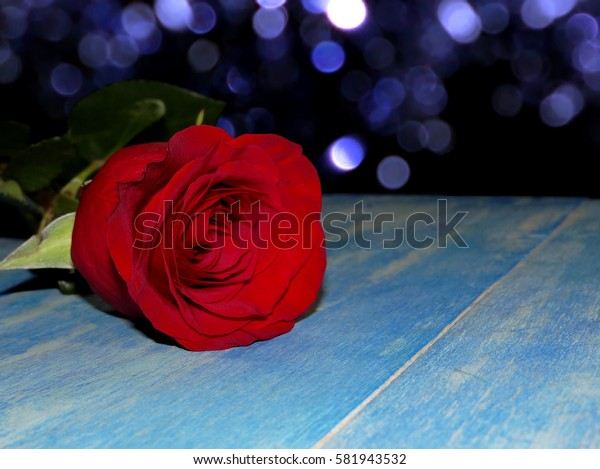 beautiful red rose lying on blue wooden boards on a brilliant background