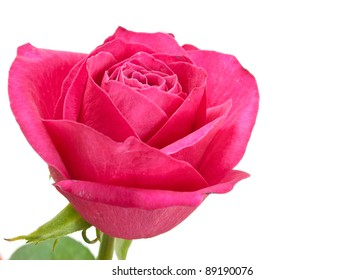 Beautiful red rose on a white background