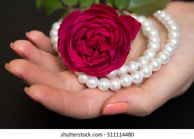 Beautiful red rose with pearls in a female hand on a black background