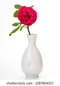 Beautiful Red Rose (Rosa 'Rouge Royale') in vase isolated on white.Valentine's or Wedding's day postcard concept with a copyspace