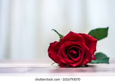 Beautiful Red Rose. Valentines day background. Symbol of romantic and love.