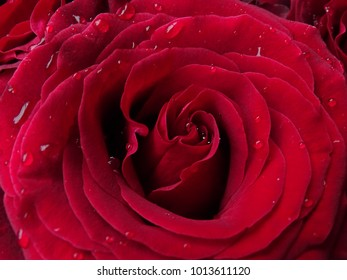 Beautiful Red Rose Water Droplets