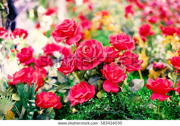 Beautiful red roses blooming in the garden for vintage background or texture , Valentine's Day.