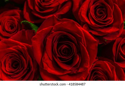 beautiful red roses close-up. festive bouquet. background.